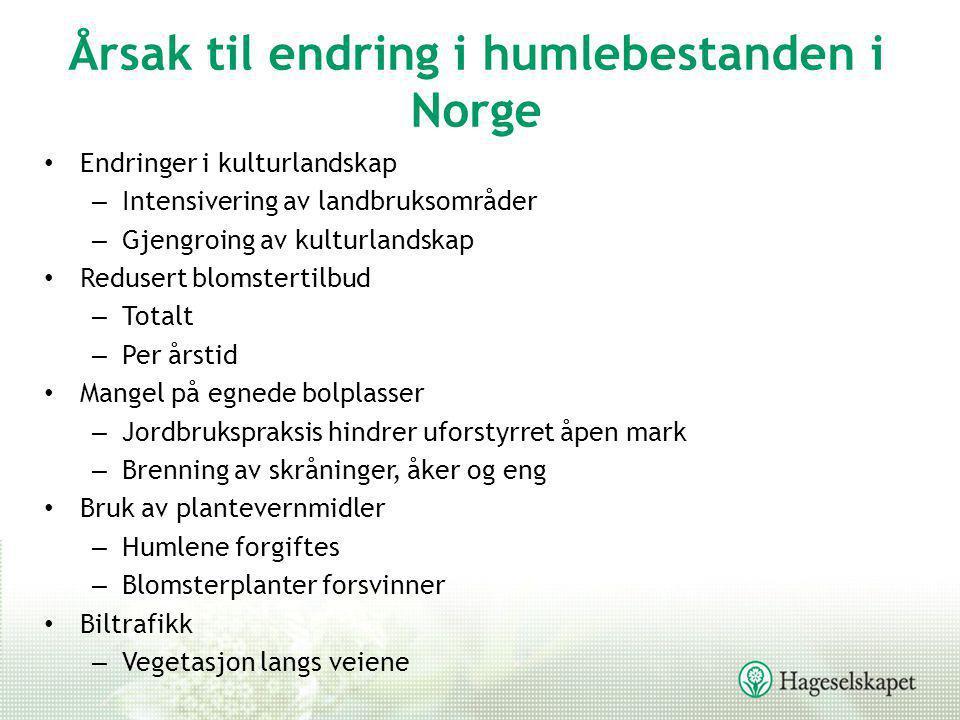 Humlearter •250 humlearter på verdensbasis •34 humlearter i Norge –27 sosiale humler inklusive 5 jordhumler –7 gjøkhumler –9 arter som er vanlige –6 rødlistearter