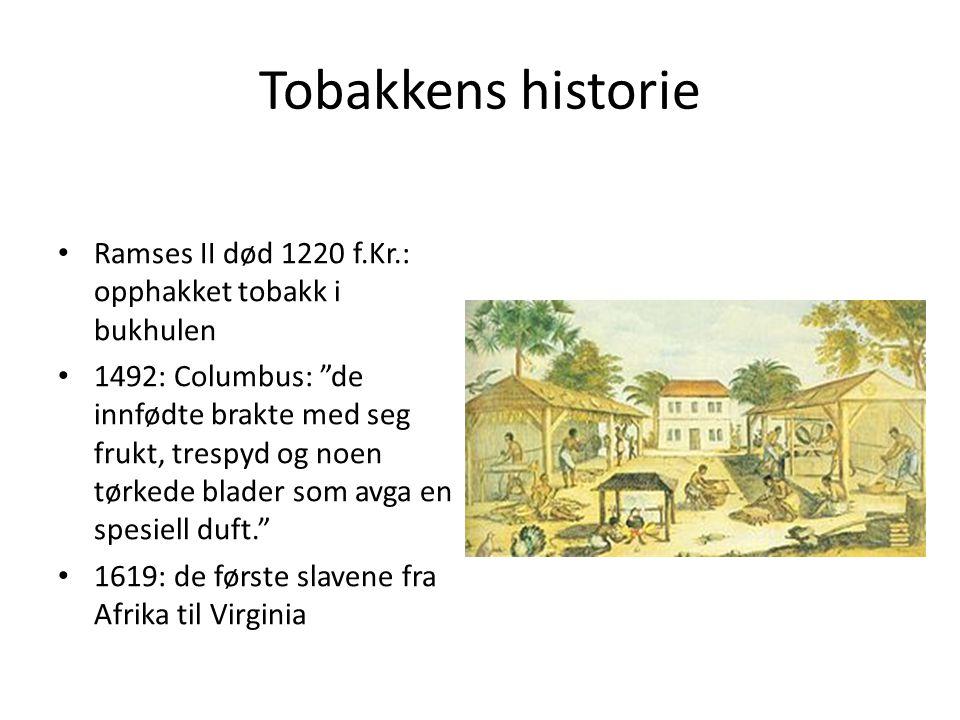 """Tobakkens historie • Ramses II død 1220 f.Kr.: opphakket tobakk i bukhulen • 1492: Columbus: """"de innfødte brakte med seg frukt, trespyd og noen tørked"""