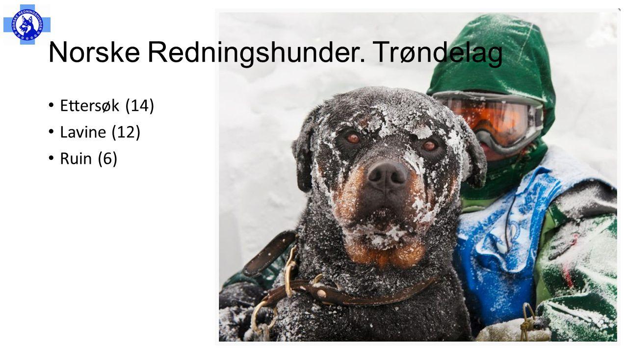 Norske Redningshunder. Trøndelag • Ettersøk (14) • Lavine (12) • Ruin (6)