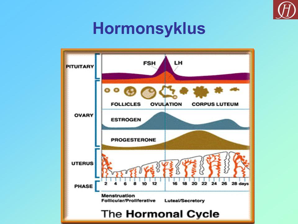 Hormonsyklus