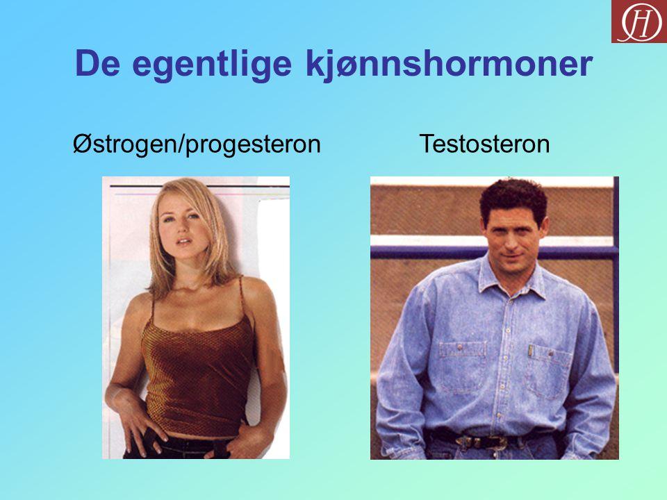 De egentlige kjønnshormoner TestosteronØstrogen/progesteron