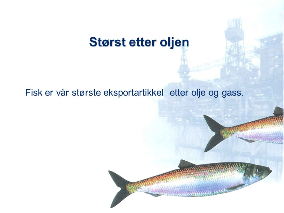 Størst etter oljen Fisk er vår største eksportartikkel etter olje og gass.
