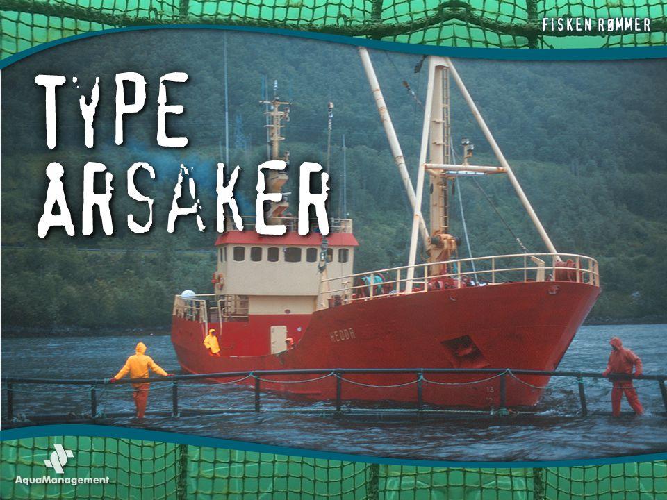 TYPE ÅRSAKER -