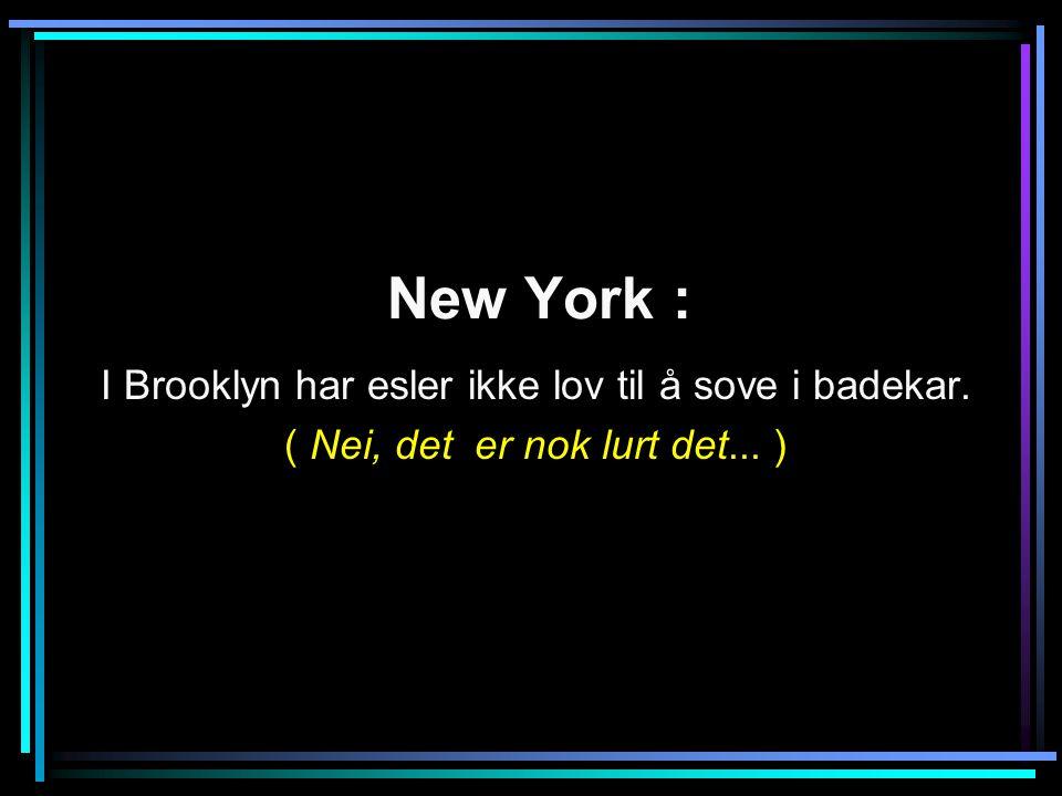 New York : I Brooklyn har esler ikke lov til å sove i badekar. ( Nei, det er nok lurt det... )