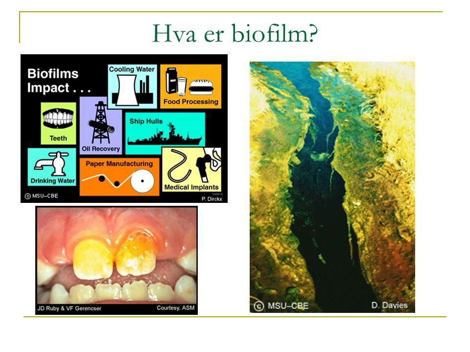 Hva er biofilm?