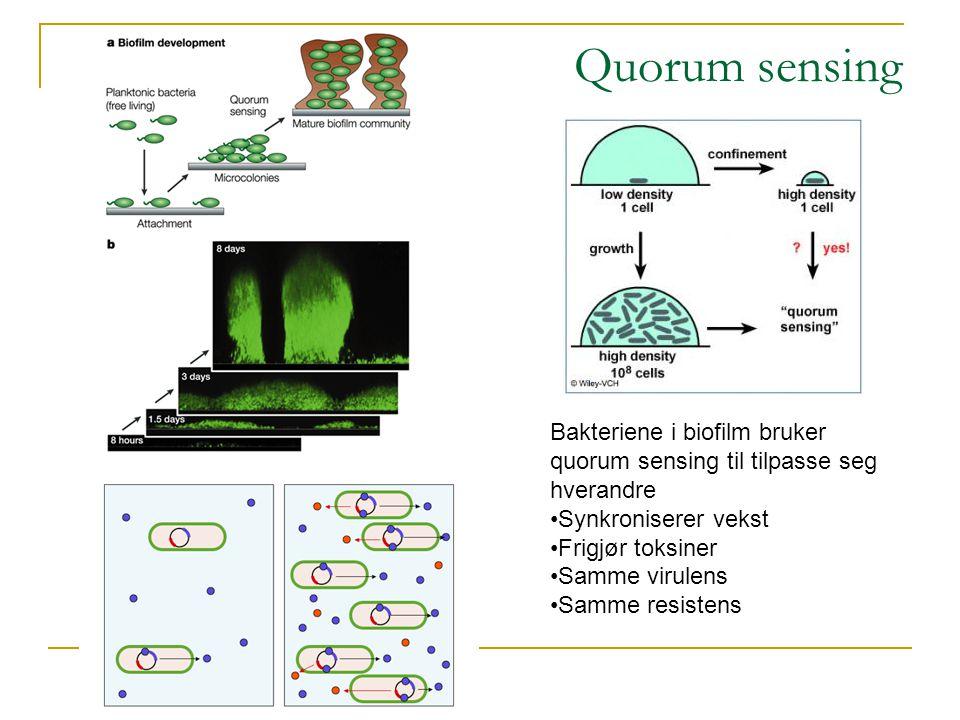 Quorum sensing Bakteriene i biofilm bruker quorum sensing til tilpasse seg hverandre •Synkroniserer vekst •Frigjør toksiner •Samme virulens •Samme resistens