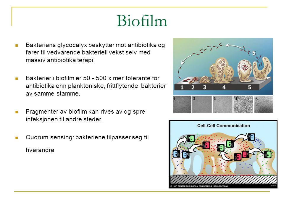 Biofilm  Bakteriens glycocalyx beskytter mot antibiotika og fører til vedvarende bakteriell vekst selv med massiv antibiotika terapi.  Bakterier i b