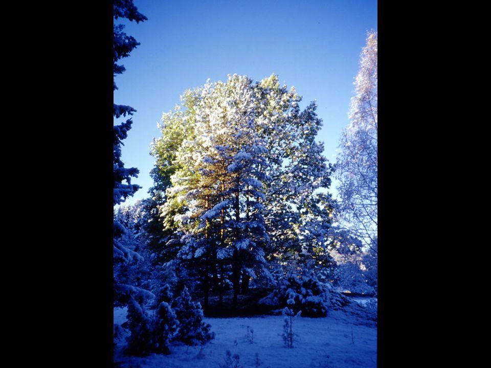 Billedtekst: Utsikt fra soveposen. Årets første snø har kommet!