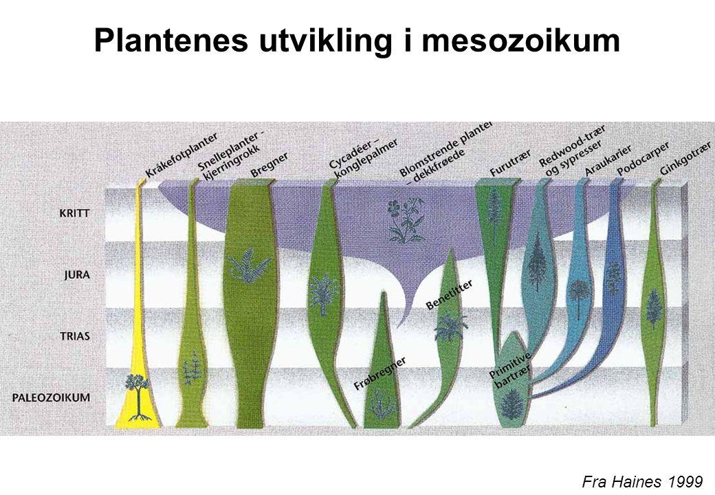 Plantenes utvikling i mesozoikum Fra Haines 1999