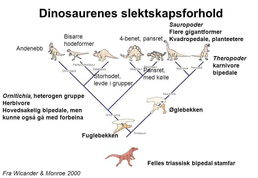 Dinosaurenes slektskapsforhold Fra Wicander & Monroe 2000 Øglebekken Fuglebekken Felles triassisk bipedal stamfar Sauropoder Flere gigantformer Kvadro