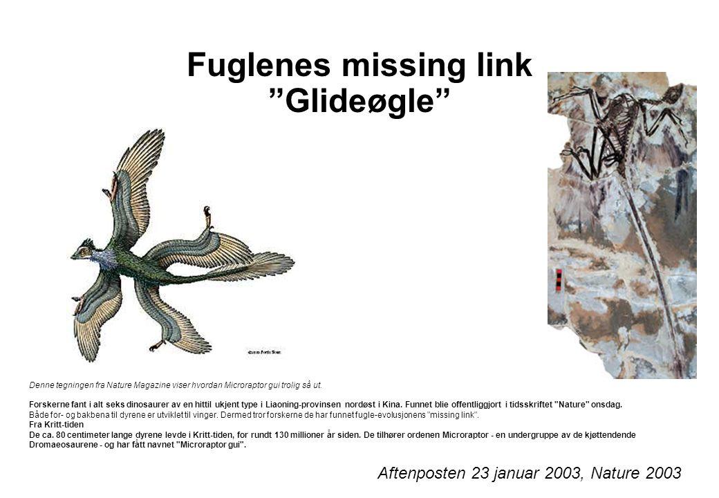 """Fuglenes missing link """"Glideøgle"""" Denne tegningen fra Nature Magazine viser hvordan Microraptor gui trolig så ut. Forskerne fant i alt seks dinosaurer"""