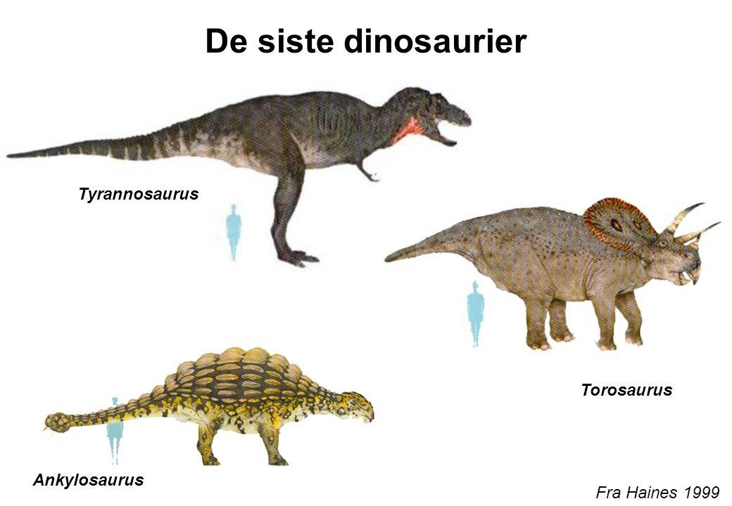 De siste dinosaurier Fra Haines 1999 Tyrannosaurus Torosaurus Ankylosaurus