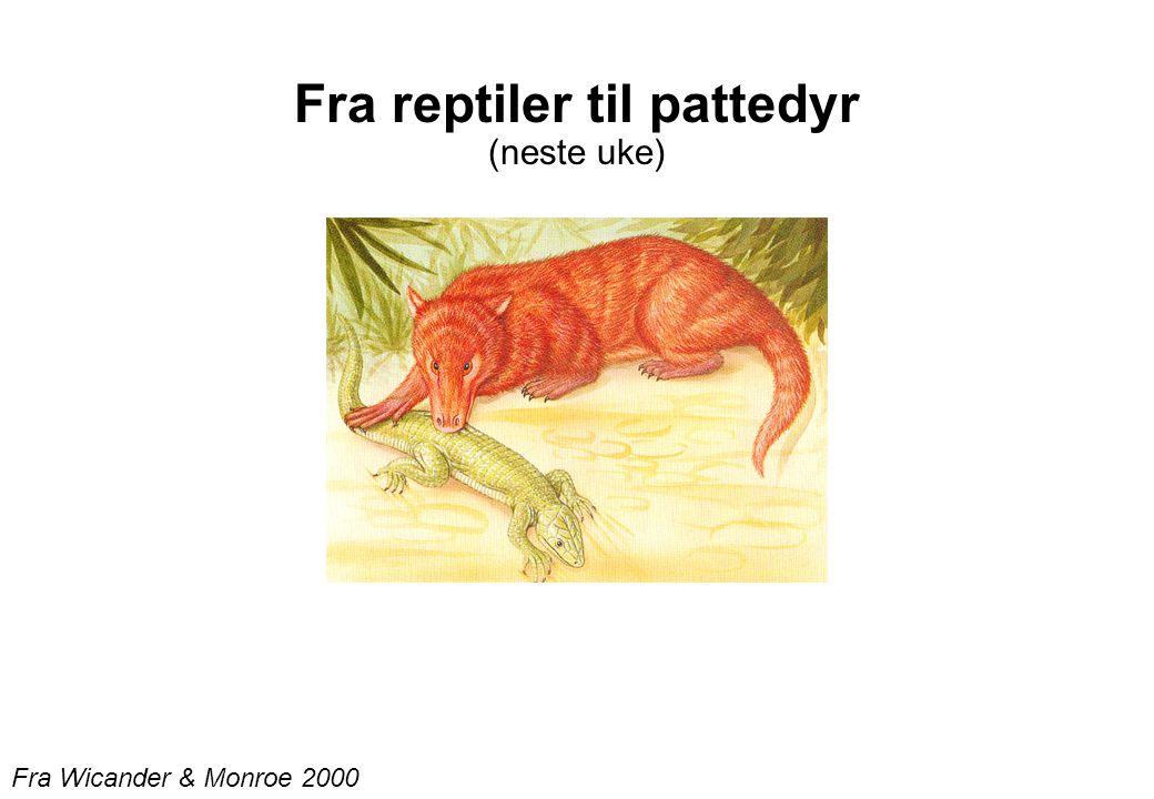Fra Wicander & Monroe 2000 Fra reptiler til pattedyr (neste uke)