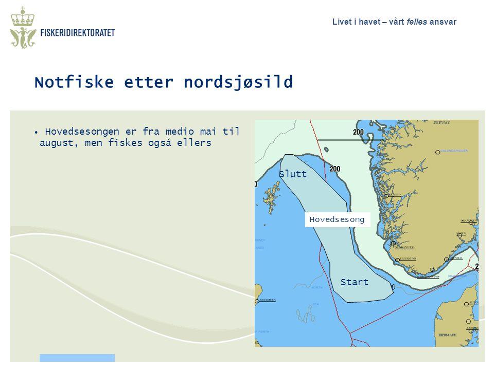 Livet i havet – vårt felles ansvar Notfiske etter nordsjøsild • Hovedsesongen er fra medio mai til august, men fiskes også ellers Hovedsesong Start Sl