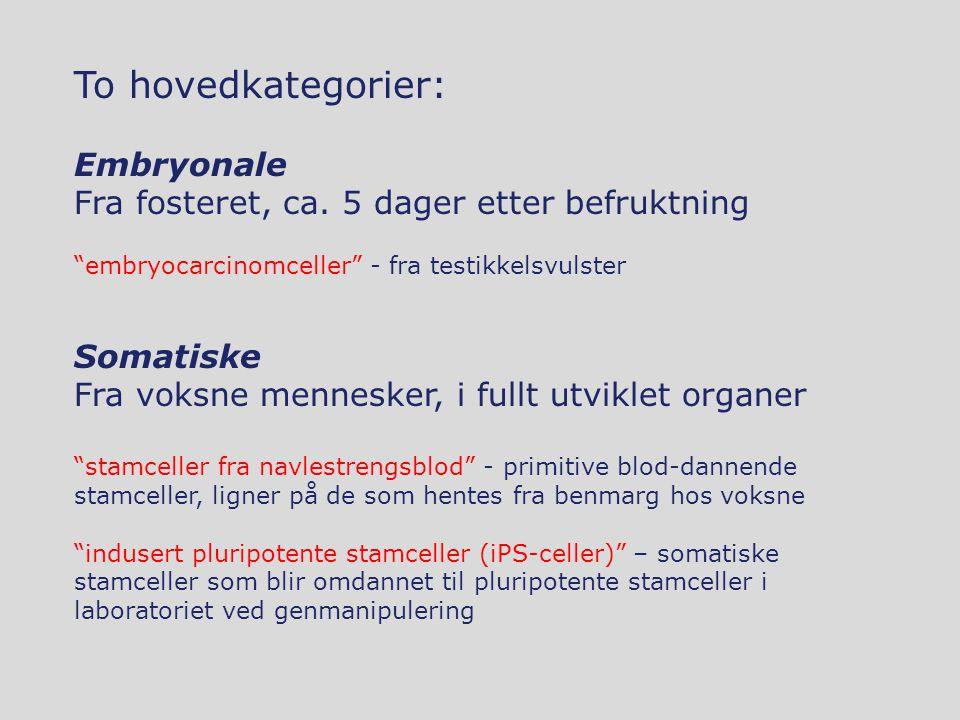 "To hovedkategorier: Embryonale Fra fosteret, ca. 5 dager etter befruktning ""embryocarcinomceller"" - fra testikkelsvulster Somatiske Fra voksne mennesk"