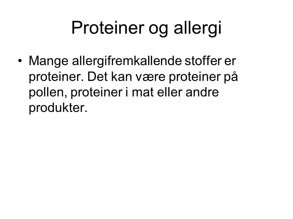 Proteiner og allergi •Mange allergifremkallende stoffer er proteiner. Det kan være proteiner på pollen, proteiner i mat eller andre produkter.