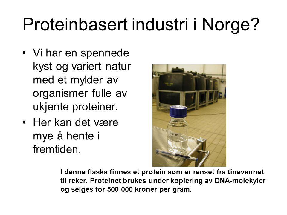 Proteinbasert industri i Norge? •Vi har en spennede kyst og variert natur med et mylder av organismer fulle av ukjente proteiner. •Her kan det være my