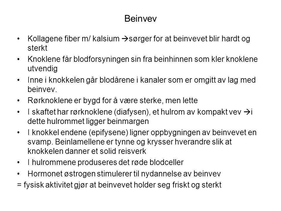 Beinvev •Kollagene fiber m/ kalsium  sørger for at beinvevet blir hardt og sterkt •Knoklene får blodforsyningen sin fra beinhinnen som kler knoklene