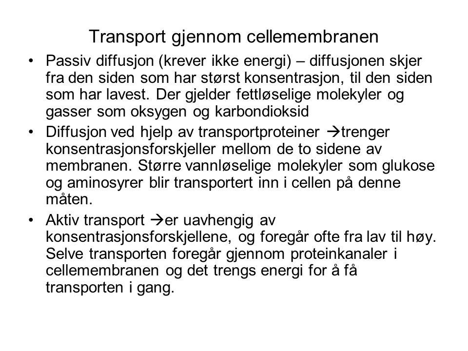 Transport gjennom cellemembranen •Passiv diffusjon (krever ikke energi) – diffusjonen skjer fra den siden som har størst konsentrasjon, til den siden
