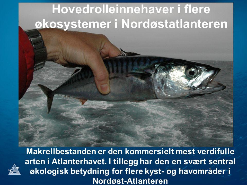 Nordøstatlantisk makrell (Scomber scombrus) •Verdiskaping på om lag 10 milliarder kroner i året.