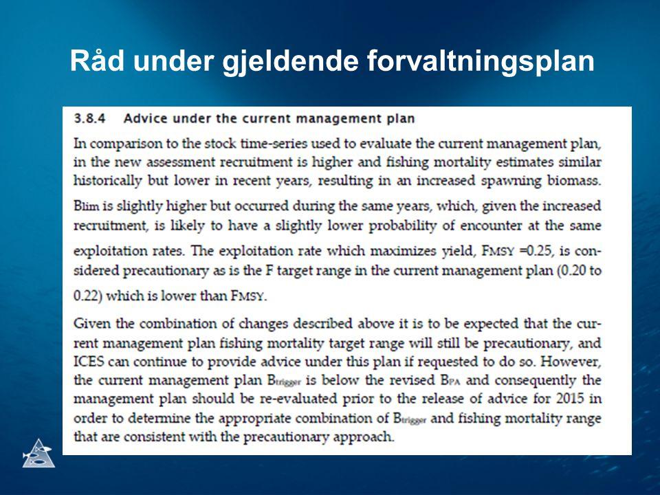 Råd under gjeldende forvaltningsplan