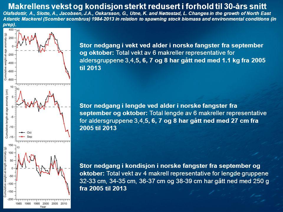 Stor nedgang i vekt ved alder i norske fangster fra september og oktober: Total vekt av 6 makreller representative for aldersgruppene 3,4,5, 6, 7 og 8 har gått ned med 1.1 kg fra 2005 til 2013 Stor nedgang i lengde ved alder i norske fangster fra september og oktober: Total lengde av 6 makreller representative for aldersgruppene 3,4,5, 6, 7 og 8 har gått ned med 27 cm fra 2005 til 2013 Stor nedgang i kondisjon i norske fangster fra september og oktober: Total vekt av 4 makrell representative for lengde gruppene 32-33 cm, 34-35 cm, 36-37 cm og 38-39 cm har gått ned med 250 g fra 2005 til 2013 Makrellens vekst og kondisjon sterkt redusert i forhold til 30-års snitt Olafsdottir, A., Slotte, A., Jacobsen, J.A., Oskarsson, G., Utne, K.