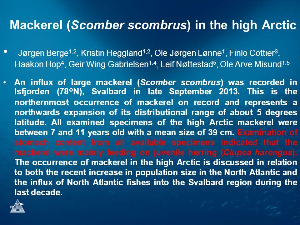 Mackerel (Scomber scombrus) in the high Arctic • Jørgen Berge 1,2, Kristin Heggland 1,2, Ole Jørgen Lønne 1, Finlo Cottier 3, Haakon Hop 4, Geir Wing Gabrielsen 1,4, Leif Nøttestad 5, Ole Arve Misund 1,5 •An influx of large mackerel (Scomber scombrus) was recorded in Isfjorden (78°N), Svalbard in late September 2013.