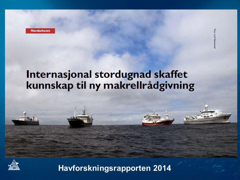Feeding incidence of larvae in mackerel guts