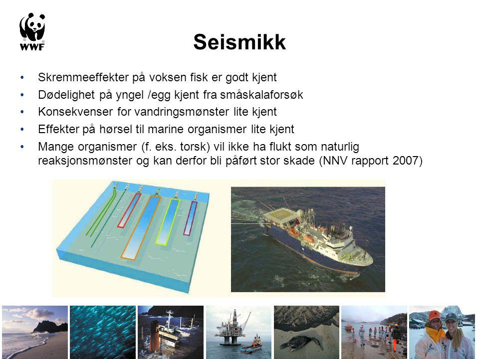 Seismikk •Skremmeeffekter på voksen fisk er godt kjent •Dødelighet på yngel /egg kjent fra småskalaforsøk •Konsekvenser for vandringsmønster lite kjen