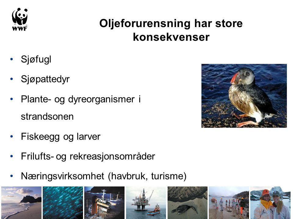 Oljeforurensning har store konsekvenser •Sjøfugl •Sjøpattedyr •Plante- og dyreorganismer i strandsonen •Fiskeegg og larver •Frilufts- og rekreasjonsom