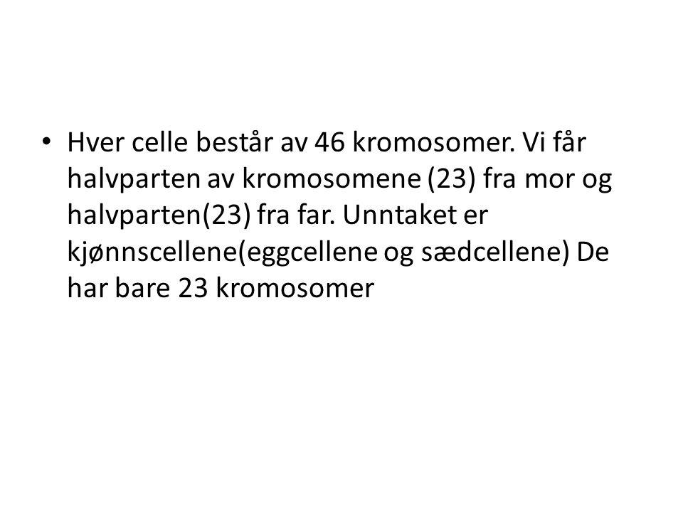 • Hver celle består av 46 kromosomer. Vi får halvparten av kromosomene (23) fra mor og halvparten(23) fra far. Unntaket er kjønnscellene(eggcellene og