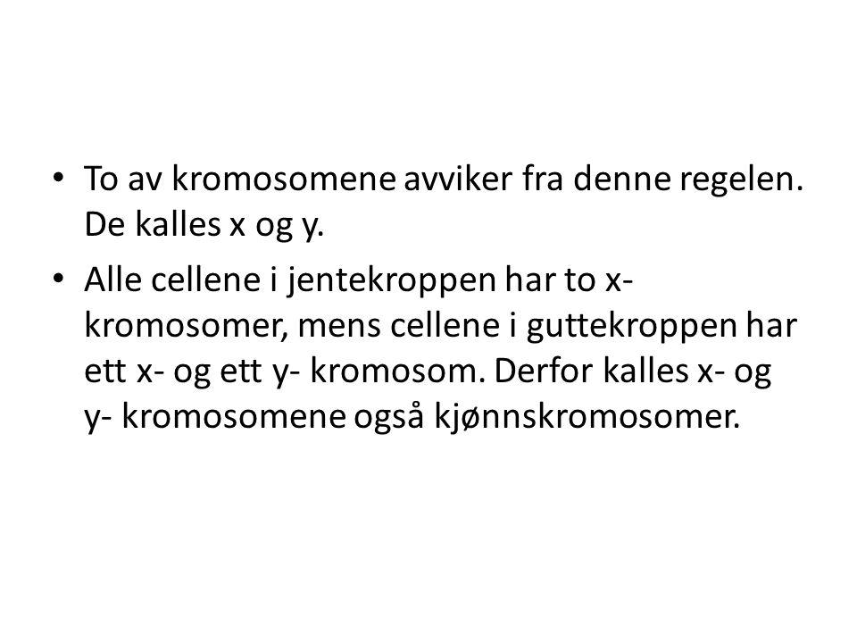 • To av kromosomene avviker fra denne regelen. De kalles x og y. • Alle cellene i jentekroppen har to x- kromosomer, mens cellene i guttekroppen har e