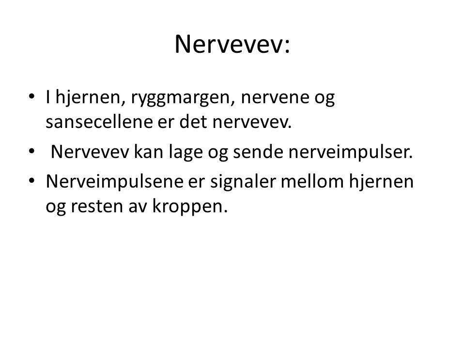 Nervevev: • I hjernen, ryggmargen, nervene og sansecellene er det nervevev. • Nervevev kan lage og sende nerveimpulser. • Nerveimpulsene er signaler m