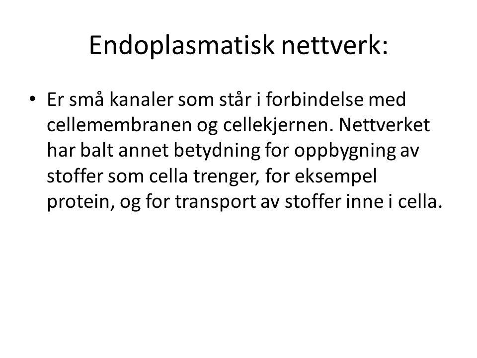 Endoplasmatisk nettverk: • Er små kanaler som står i forbindelse med cellemembranen og cellekjernen. Nettverket har balt annet betydning for oppbygnin