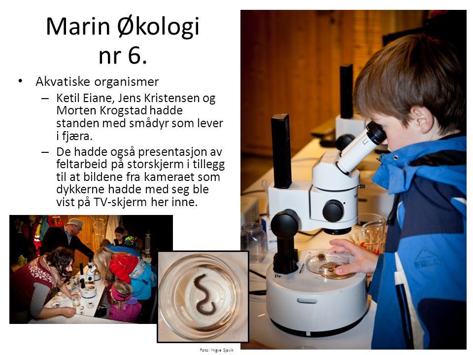 • Akvatiske organismer – Ketil Eiane, Jens Kristensen og Morten Krogstad hadde standen med smådyr som lever i fjæra. – De hadde også presentasjon av f