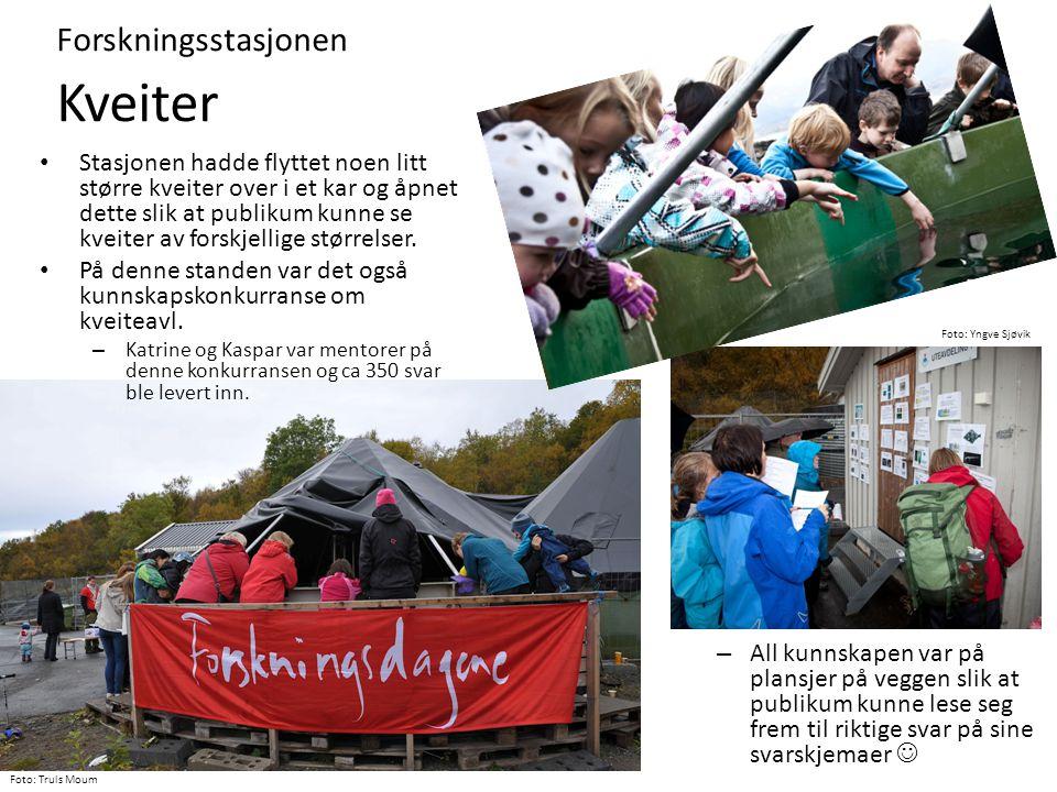 Forskningsstasjonen Kveiter Foto: Yngve Sjøvik Foto: Truls Moum – All kunnskapen var på plansjer på veggen slik at publikum kunne lese seg frem til ri