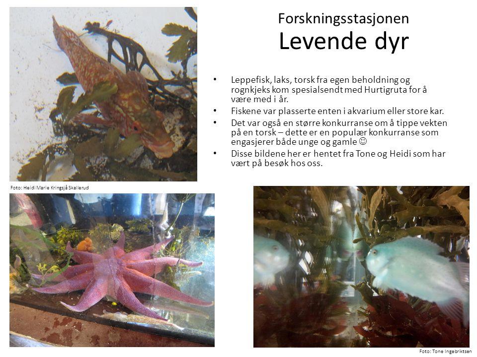 • Leppefisk, laks, torsk fra egen beholdning og rognkjeks kom spesialsendt med Hurtigruta for å være med i år. • Fiskene var plasserte enten i akvariu