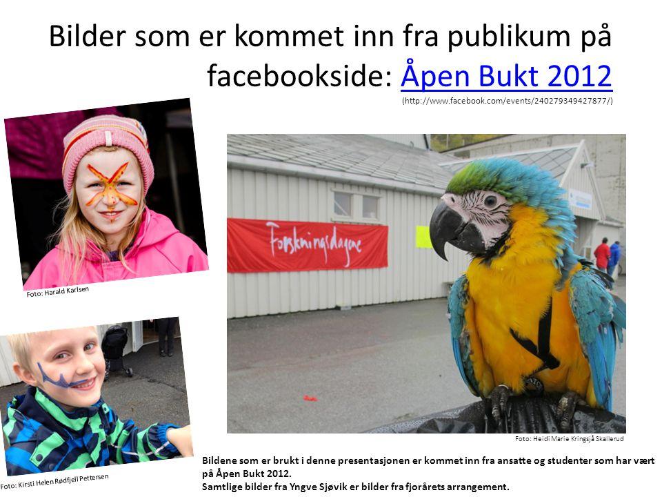 Bilder som er kommet inn fra publikum på facebookside: Åpen Bukt 2012 (http://www.facebook.com/events/240279349427877/)Åpen Bukt 2012 Foto: Heidi Mari
