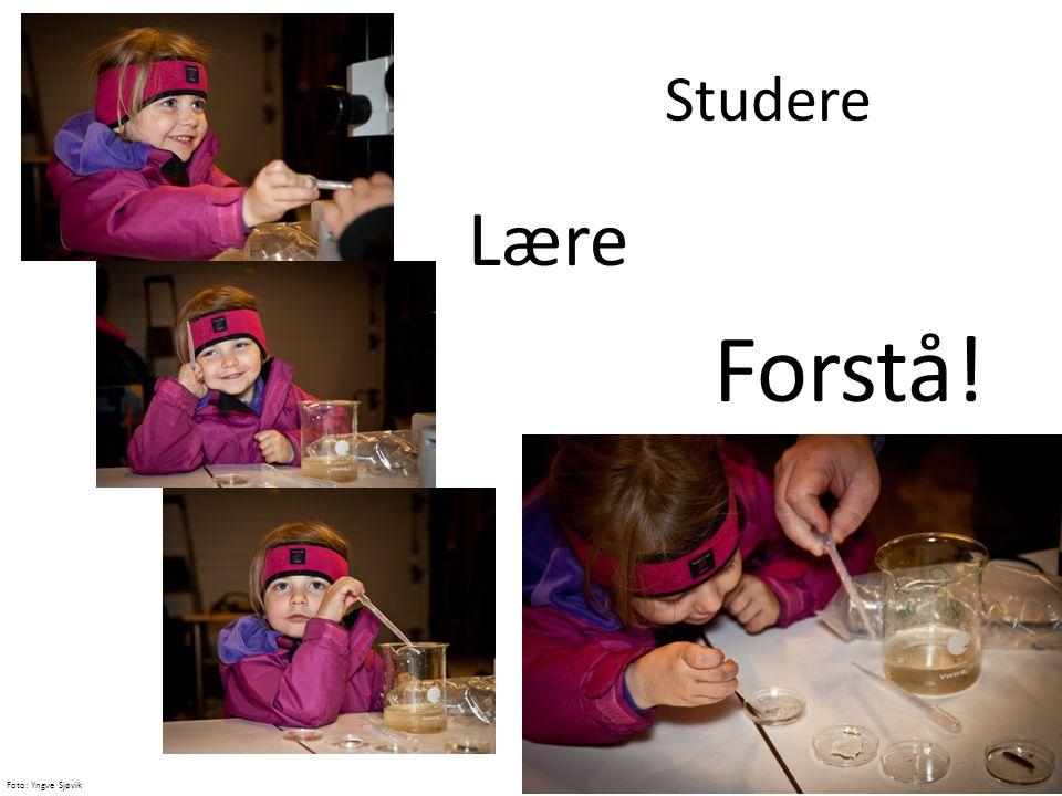 Studere Lære Forstå! Foto: Yngve Sjøvik