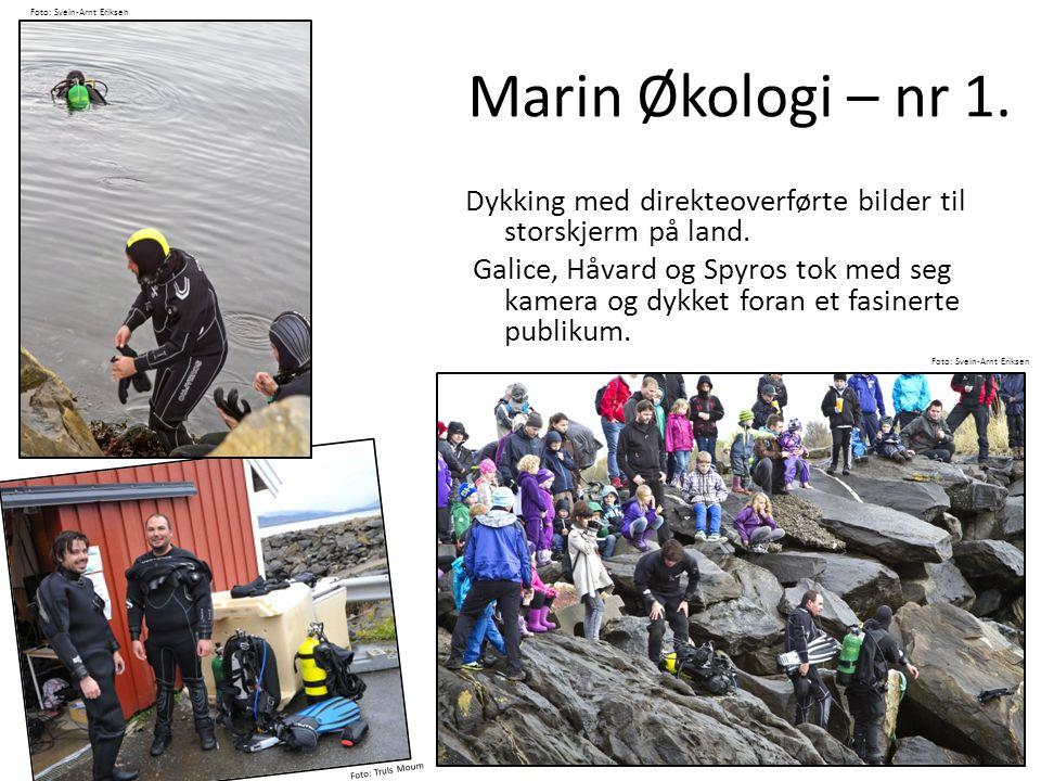 Marin Økologi – nr 1. Dykking med direkteoverførte bilder til storskjerm på land. Galice, Håvard og Spyros tok med seg kamera og dykket foran et fasin