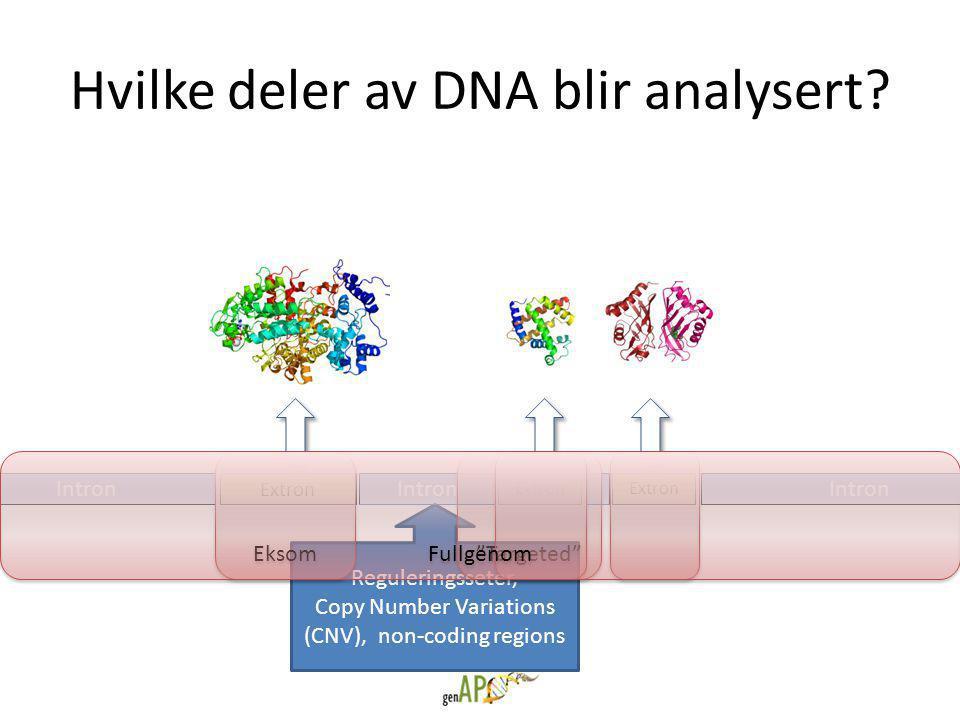 Hvilke deler av DNA blir analysert.