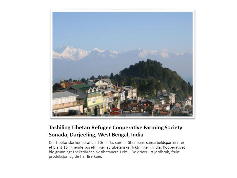Slik er været mye av tiden Stedet ligger på 1800 m.o.h, midt i tåkebeltet rundt foten av Himalaya.