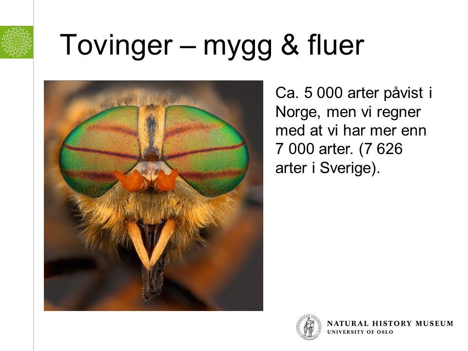 Tovinger – mygg & fluer Ca. 5 000 arter påvist i Norge, men vi regner med at vi har mer enn 7 000 arter. (7 626 arter i Sverige).