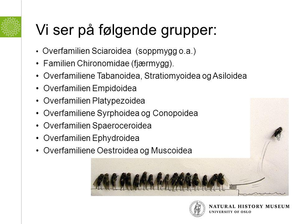 Vi ser på følgende grupper: • Overfamilien Sciaroidea (soppmygg o.a.) • Familien Chironomidae (fjærmygg). • Overfamiliene Tabanoidea, Stratiomyoidea o