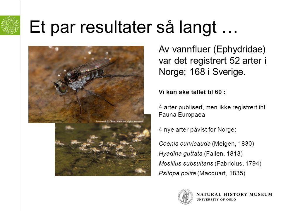 Et par resultater så langt … Av vannfluer (Ephydridae) var det registrert 52 arter i Norge; 168 i Sverige. Vi kan øke tallet til 60 : 4 arter publiser