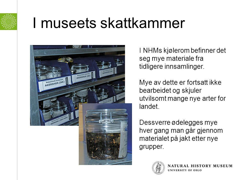 I museets skattkammer I NHMs kjølerom befinner det seg mye materiale fra tidligere innsamlinger. Mye av dette er fortsatt ikke bearbeidet og skjuler u