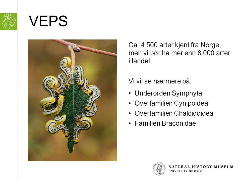 VEPS Ca. 4 500 arter kjent fra Norge, men vi bør ha mer enn 8 000 arter i landet. Vi vil se nærmere på: • Underorden Symphyta • Overfamilien Cynipoide