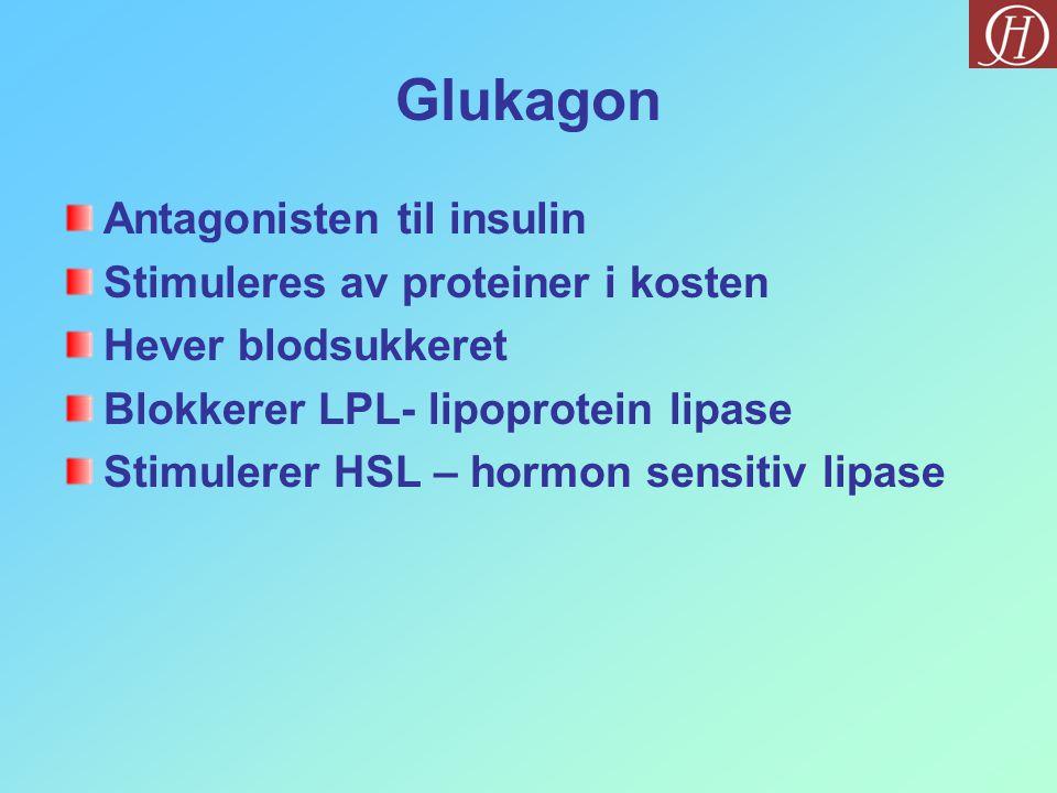 Glukagon Antagonisten til insulin Stimuleres av proteiner i kosten Hever blodsukkeret Blokkerer LPL- lipoprotein lipase Stimulerer HSL – hormon sensitiv lipase