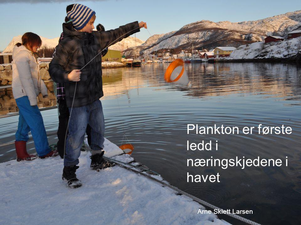 Plankton er første ledd i næringskjedene i havet Arne Sklett Larsen