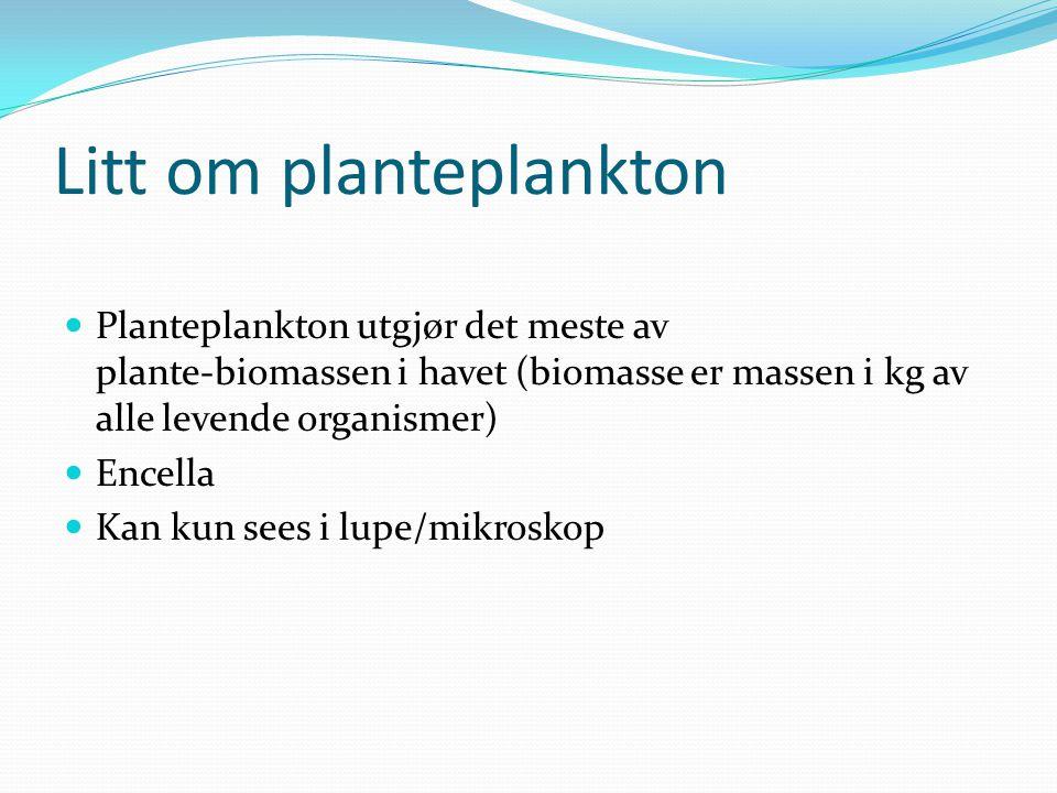 Litt om planteplankton  Planteplankton utgjør det meste av plante-biomassen i havet (biomasse er massen i kg av alle levende organismer)  Encella 